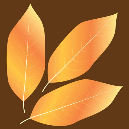 dried: dried leaves Illustration
