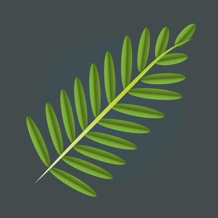 sauce: hojas de sauce Vectores