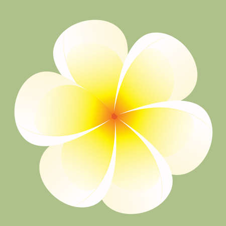 frangipani flower: frangipani flower Illustration
