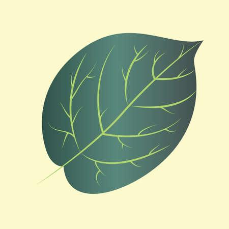 tilo: hojas de Tilo Vectores