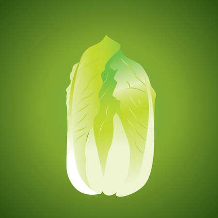 napa: napa cabbage