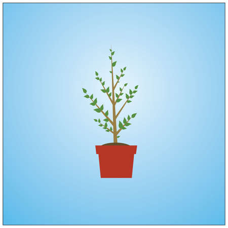 potted: potted plant