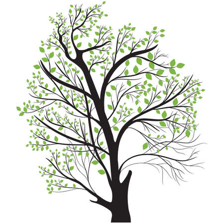 top: tree top with green leaves