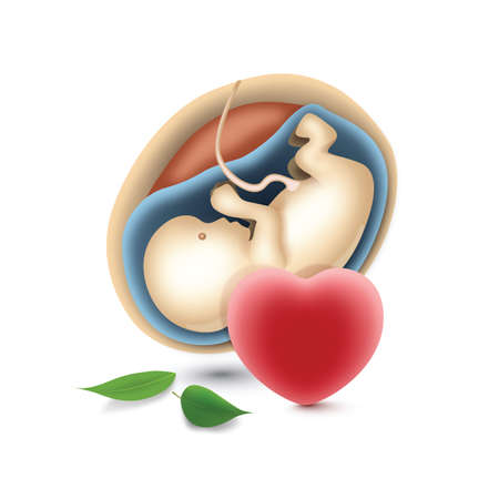 womb: baby in womb with heart icon