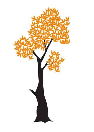 maple tree: maple tree