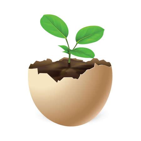 egg plant: small plant in egg shell Illustration