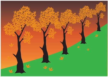 maple tree: autumn season maple tree background