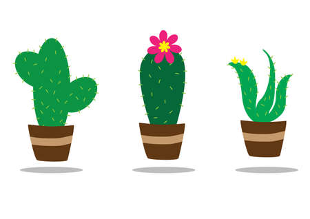 plant pot: cactus plant in pot
