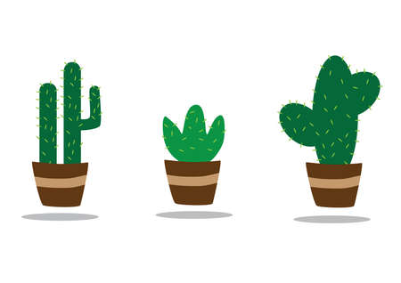 plant pot: cactus plant in pot