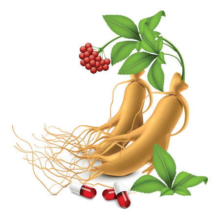 ginseng: ginseng and supplement capsules Illustration