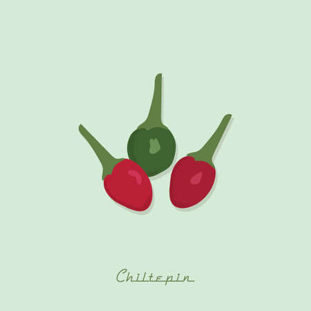 chiltepin peppers Illustration