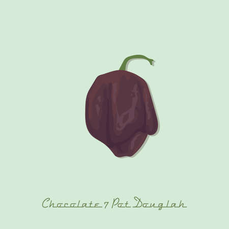 chocolate 7 pot douglah pepper Illustration