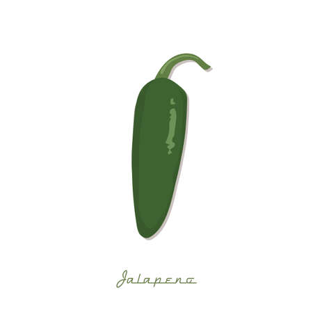 jalapeno: jalapeno pepper Illustration
