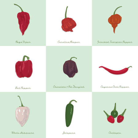 hot pepper: set of chili icons Illustration
