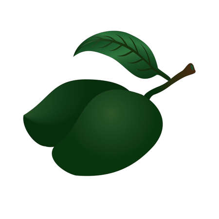 mangoes: green mangoes