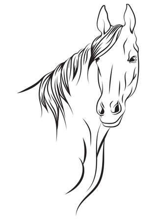 paard hoofd