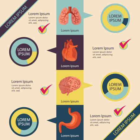organes humains internes infographique