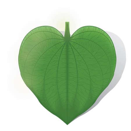 leaf: leaf Illustration