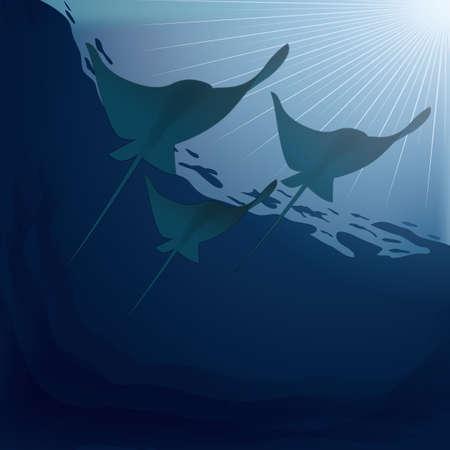 manta sous-marin ray