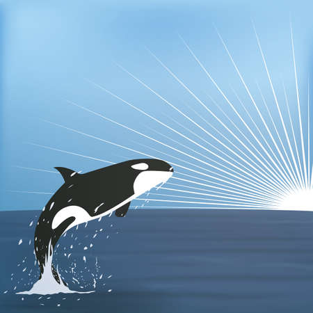 water's: orca jumping from the sea waters