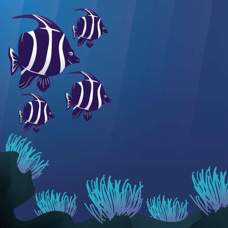 pennant: pennant coralfish underwater
