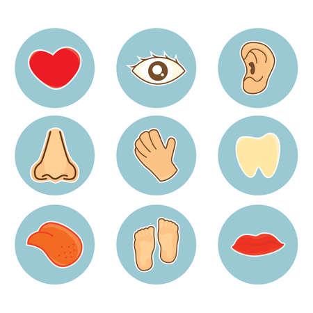 set of body parts