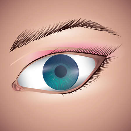 lash: human eye