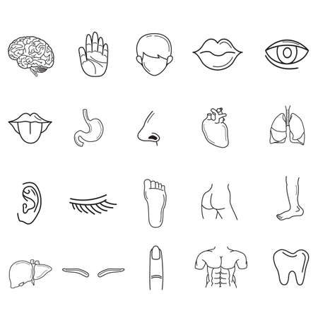 body parts: collection of human body parts