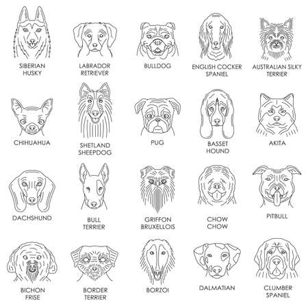 collection of dog breeds