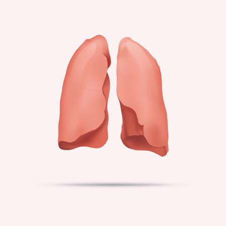 respiration: human lungs