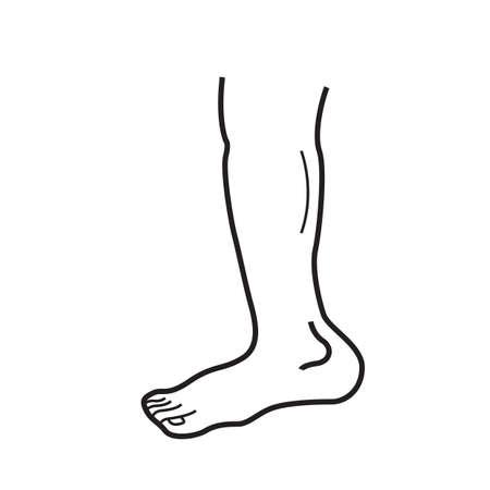 human leg: human leg