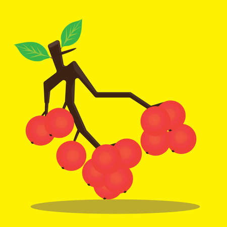 ash berry: bunch of rowan Illustration