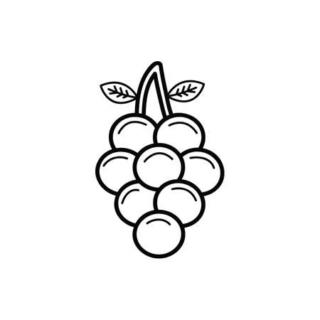 clusters: grapes Illustration