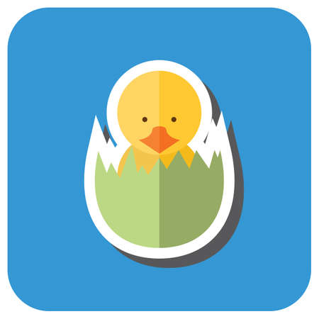 eggshell: newborn chick in eggshell