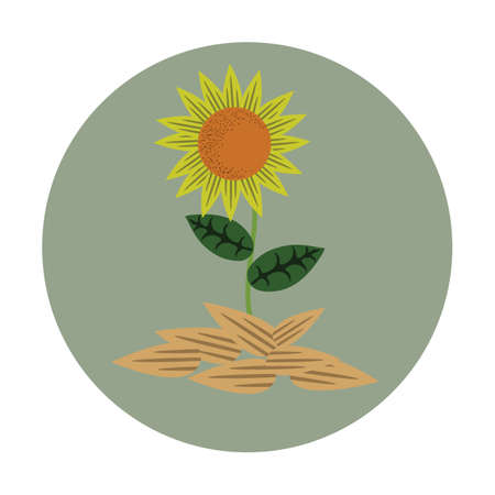 oil crops: sunflower with seeds