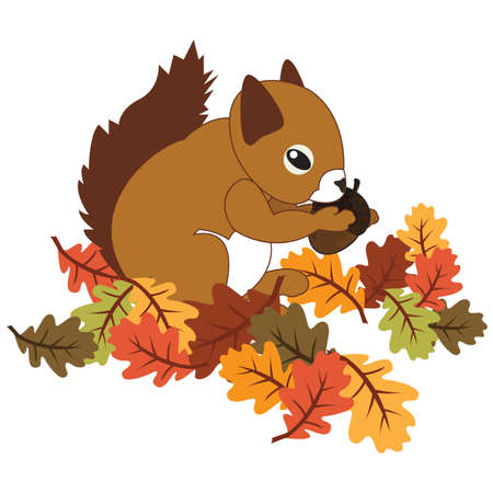 acorn squirrel: squirrel with acorn and maple leaves Stock Photo