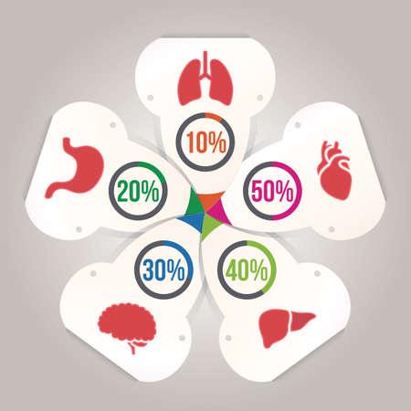 interne menselijke organen infographic