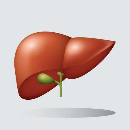 human liver: human liver