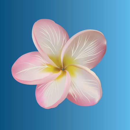 flowers close up: plumeria