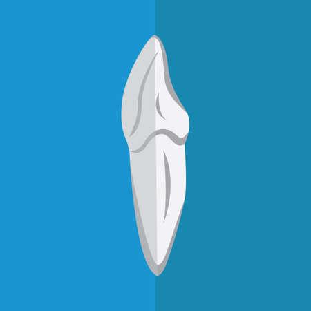 canine: canine tooth