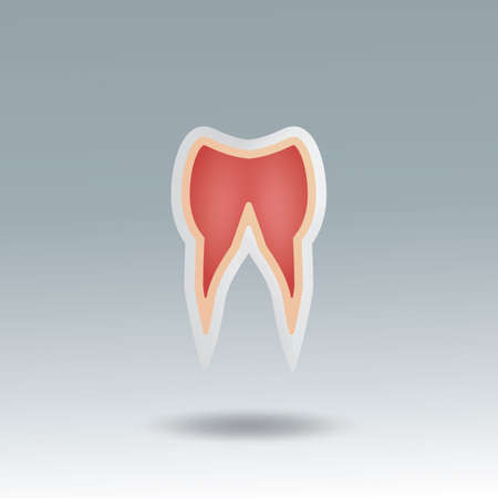 tooth root: tooth root Illustration