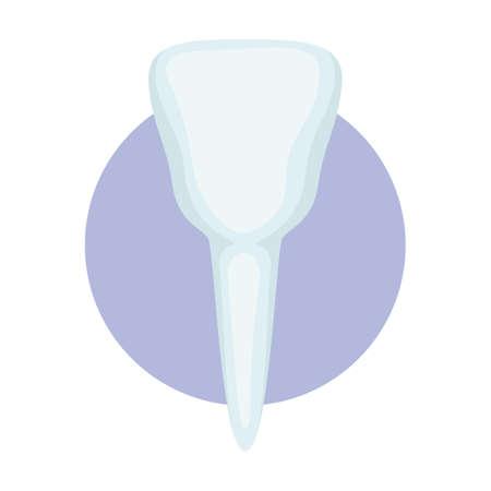 premolar tooth