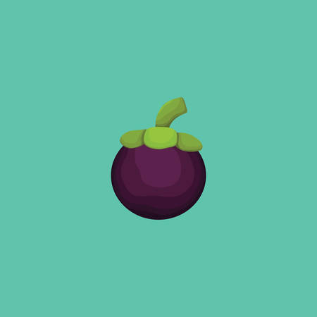 mangosteen: mangosteen Illustration