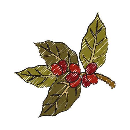 ripe: branch of ripe coffee