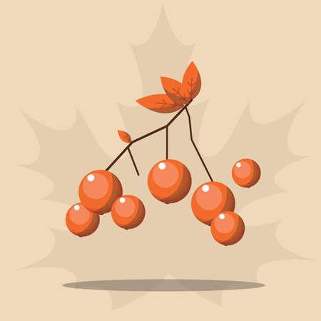 rowan fruit 向量圖像