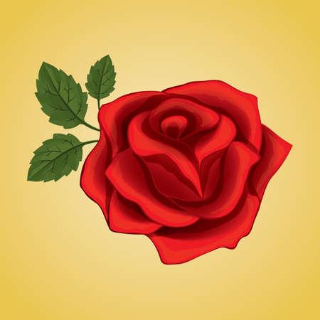 red rose: red rose Illustration