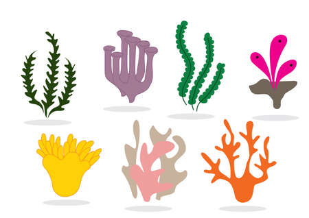 polyp corals: collection of corals