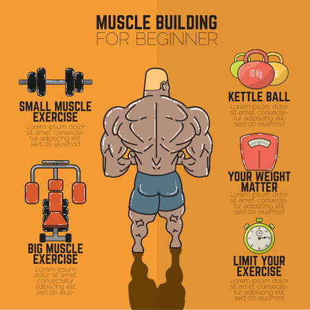 muscle building: muscle building infographic