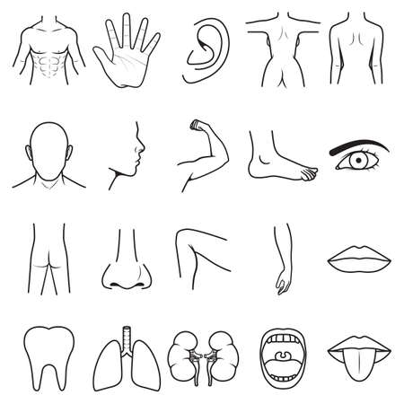 body parts: parts of the body Illustration