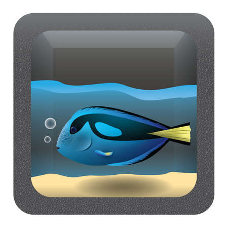 tang: blue tang fish in an aquarium